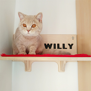 Willy square