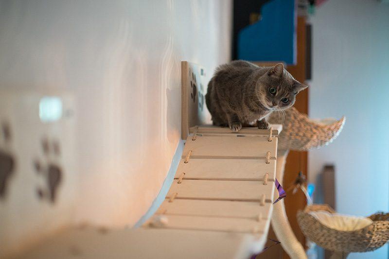 Parete attrezzata per gatti con Ettore