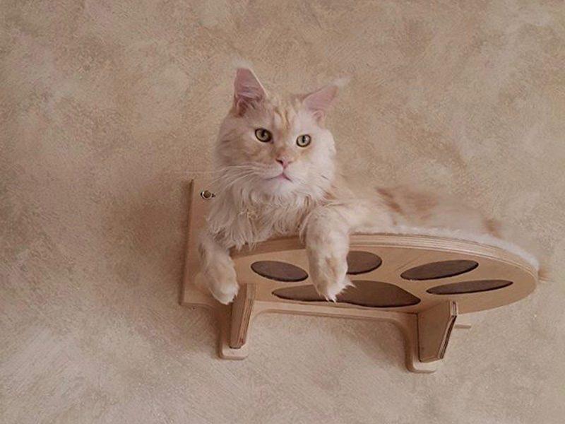 Umarth Mensola pera gattia in legno maine coon
