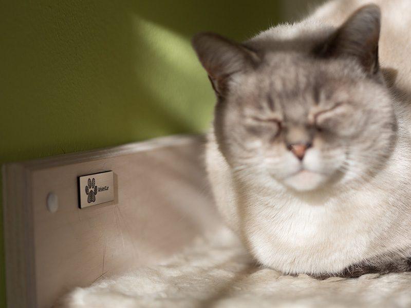 Mensola per gatti